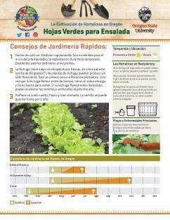 Hojas Verdes para Ensalada 1