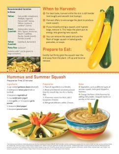 Summer Squash Monthly 2