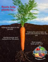How roots help plants
