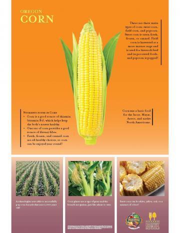 Corn Oregon Harvest Poster