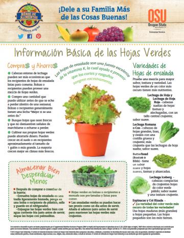 Hojas Verdes para Ensalada Últimos consejos Alimentos