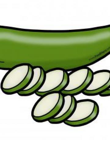 Sliced Zucchini Color