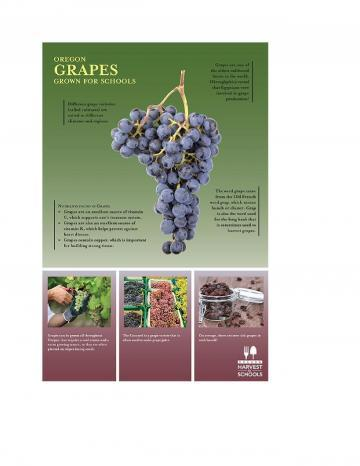 Grapes Oregon Harvest Poster