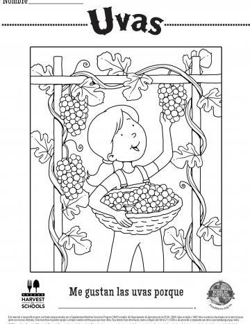 Hojas para Colorear de Uvas