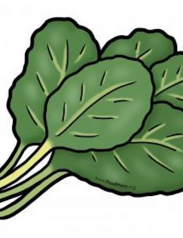 Leafy Greens Illustration