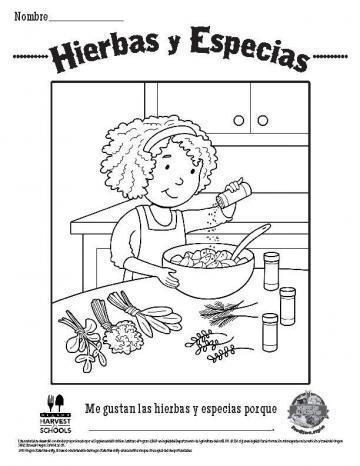 Hojas para Colorear de Hierbas y Especias