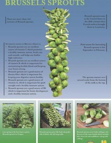 Brussels Sprouts Oregon Harvest Poster