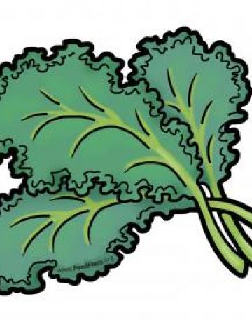 Kale Illustration