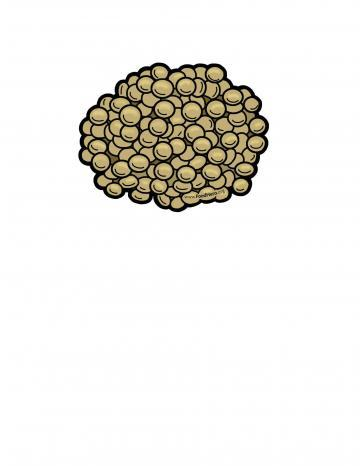 Lentils Illustration