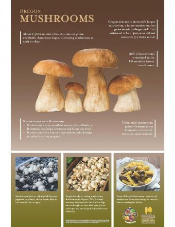 Mushrooms Oregon Harvest Poster