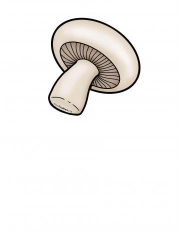 Ilustracion de Hongo