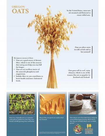 Oats Product Poster