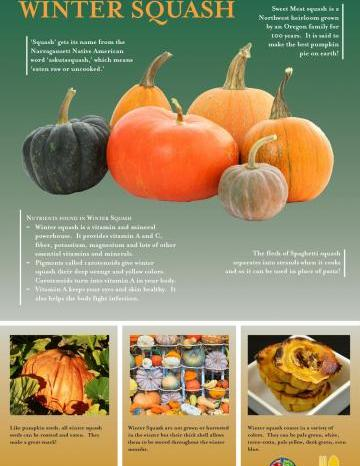 Winter Squash Oregon Harvest Poster