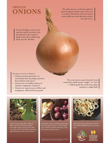 Onions Oregon Harvest Poster