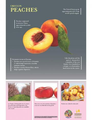 Peaches Oregon Harvest Poster