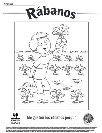 Hojas para Colorear de Rábanos