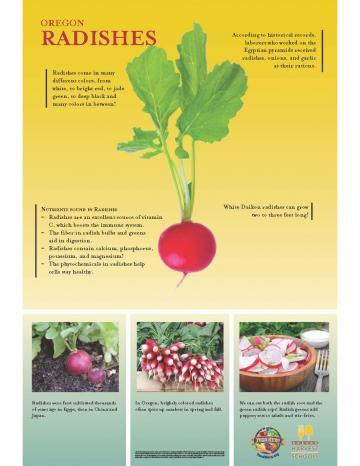 Radishes Oregon Harvest Poster