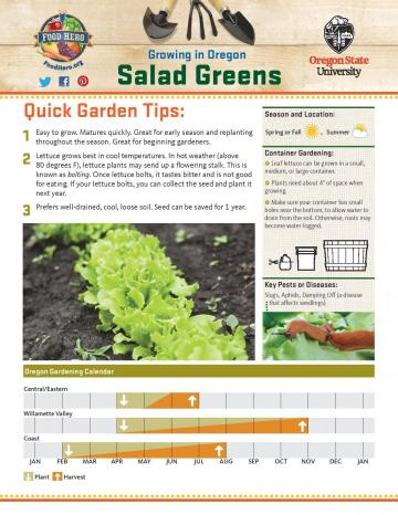 Salad Greens Garden Monthly - English