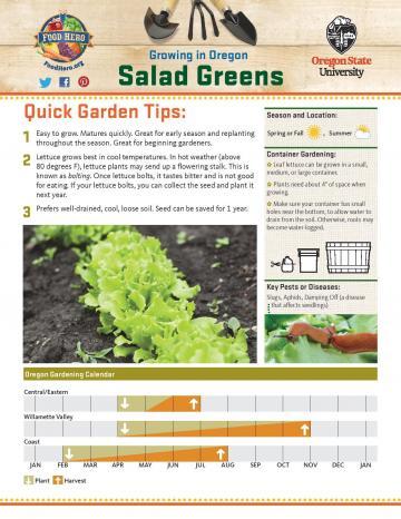 Salad Greens Garden Monthly - English