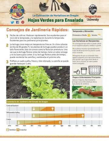 Salad Greens Garden Monthly - Spanish