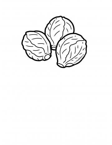 Brussels Sprouts Blackline