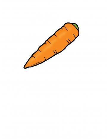 Carrot Color Illustration