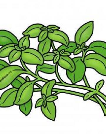 Ilustración de Albahaca