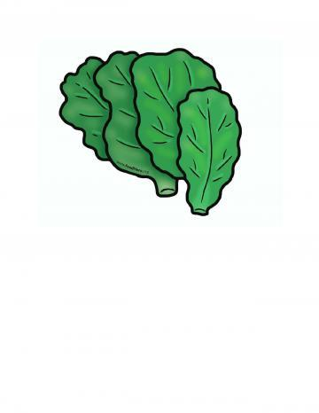 Spinach Illustration