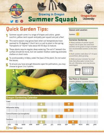 Summer Squash Garden Monthly - English
