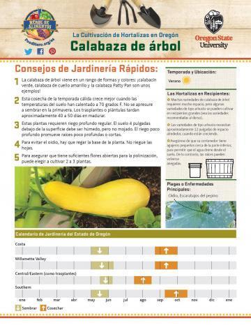 Summer Squash Garden Monthly Spanish