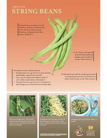 Green Beans Oregon Harvest Poster