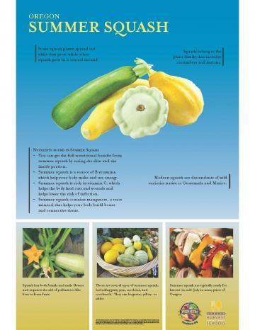 Summer Squash Oregon Harvest Poster