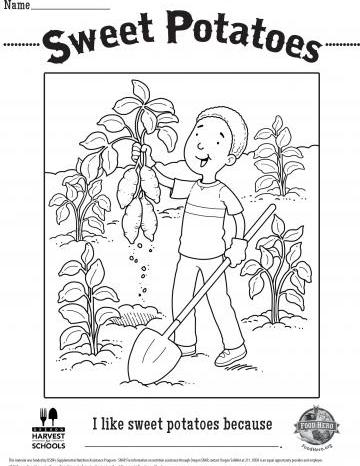 Sweet Potatoes Coloring Sheet