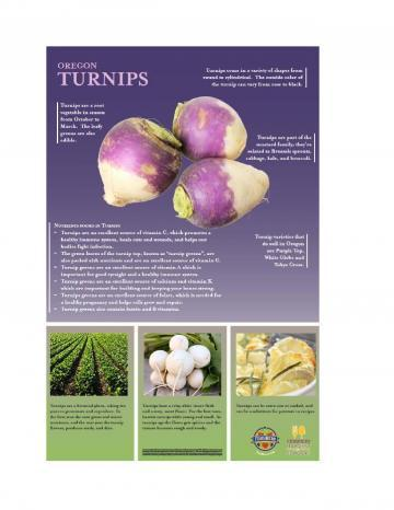 Turnips Oregon Harvest Poster