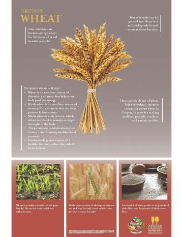 Wheat Oregon Harvest Poster