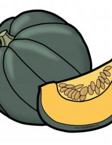 Whole Winter Squash Illustration
