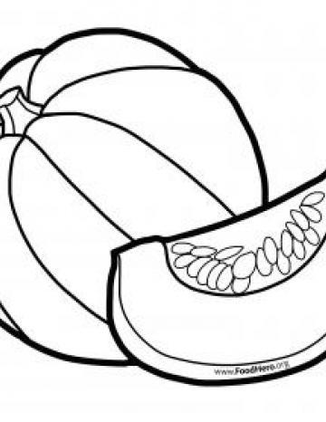 Whole Winter Squash Blackline Illustration